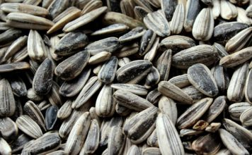 Health Benefits Of Using Sunflower Seeds That You Should Know
